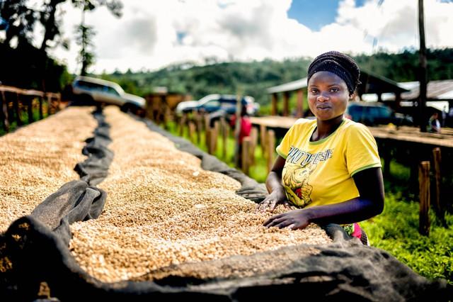 кофе Руанда, Купить кофе из Руанды,