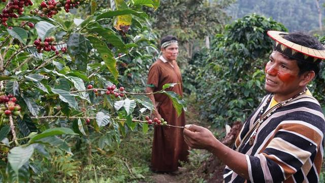 Выращивание кофе в Перу, Заказать Перуанский кофе в Украине