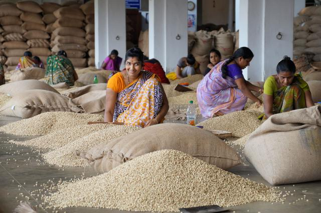 Индийский кофе Муссонный Малабар, обработка муссонным климатом