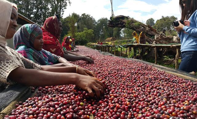 Эфиопский кофе Эфиопия Йоргачеф (Иргачифе) Купить по низкой цене