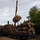 Покупаем лес кругляк береза, ольха, фото 2
