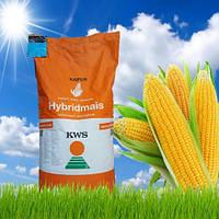Семена кукурузы КВС Крабас ФАО 300