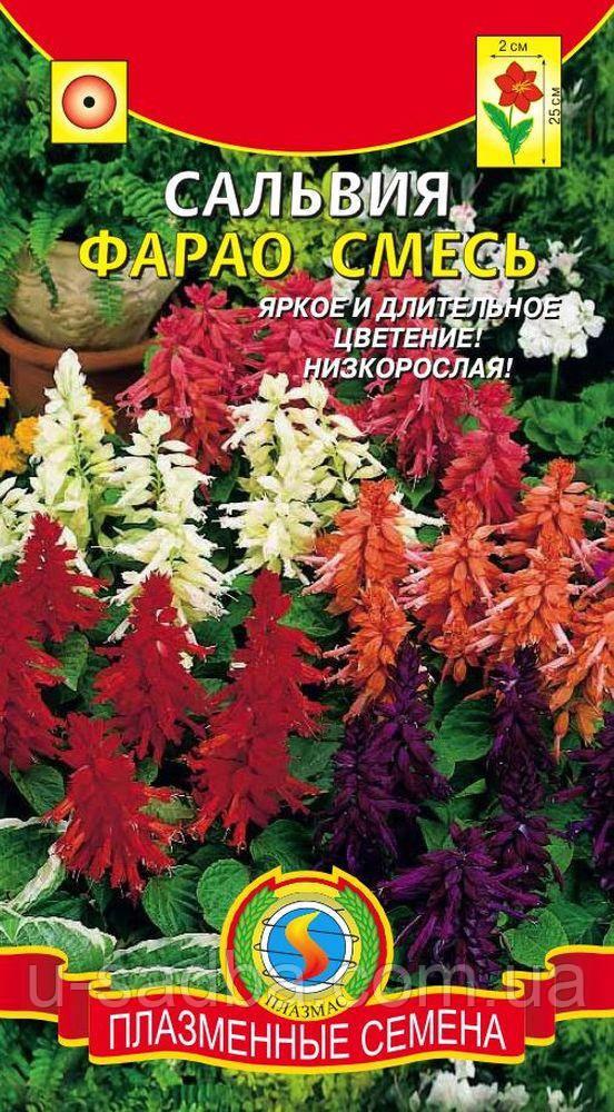 Семена цветов  Сальвия Фарао смесь 0,05 г смесь (Плазменные семена)