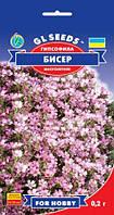 Гипсофила Бисер многолетняя изящное стелющееся с облаком нежных цветков растение, упаковка 0,2 г