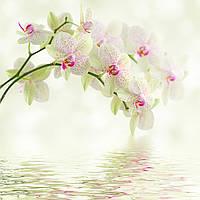 """Фотообои с цветами """"Белые орхидеи в воде"""""""