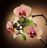 "Фотообои на стену под заказ ""Орхидеи на темном фоне"""