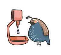Ниппельные поилки и кормушки для птиц