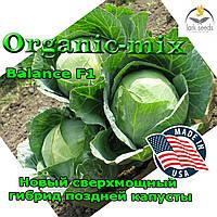 Сверхмощный гибрид поздней капусты Баланс F1 / Balance F1, 2500 семян, Lark seeds (США)