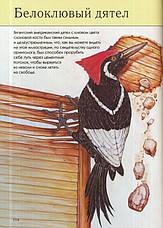 Вымершие животные  Полная энциклопедия , фото 2