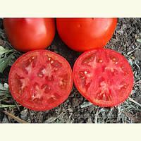 Семена томата Каста (Супернова) F1 \ Kasta F1 1000 семян Clause