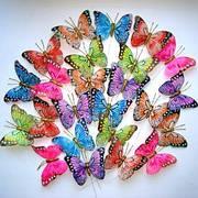 Метелики, пташки, комахи