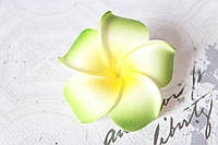 Цветы плюмерии 6 см диаметр зеленого цвета, фото 1