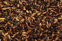 Сидерат семена сорго Суданка, 1 кг