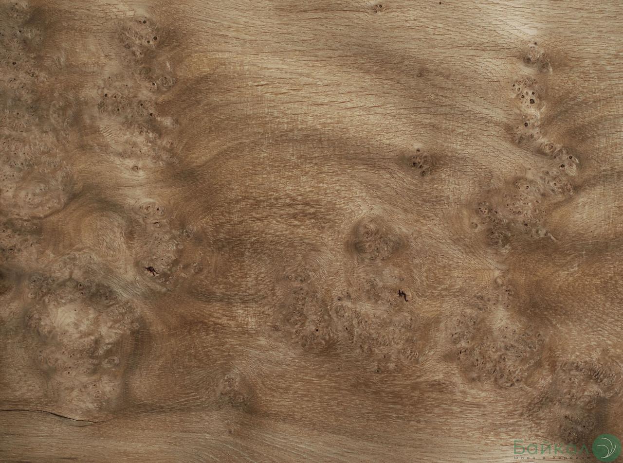 Шпон корінь Дуб 0,6 мм - Logs/ Singl