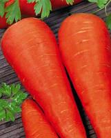 Семена морковь Каротель 500г. Украина