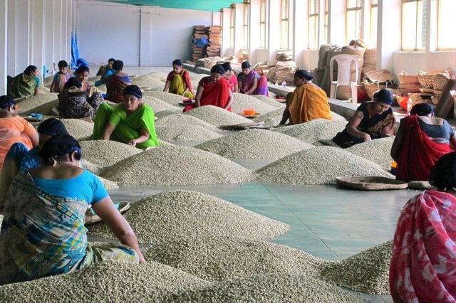 Свежеобжаренный индийский кофе Индия Муссонный Малабр в зернах купить