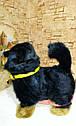 🐶 Интерактивная собака собачка щенок песик живая игрушка на поводке видео: ПОДАРКИ НА ДЕНЬ РОЖДЕНИЯ, фото 7