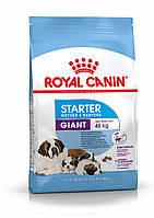 Корм для щенков гигантских пород от отъема до 2 месяцев Royal Canin Giant Starter, 4 кг