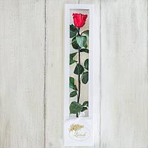 Стабилизированная долгосвежая роза в коробке Lerosh - Standart, 60 см, Красный