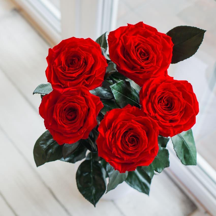 Стабилизированная долгосвежая роза без коробки Букет из 5 роз Lerosh - Premium, 60 см, Красный