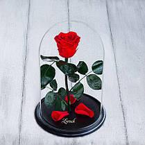 Стабилизированная роза в колбе Lerosh - Standart 33 см,  Красный