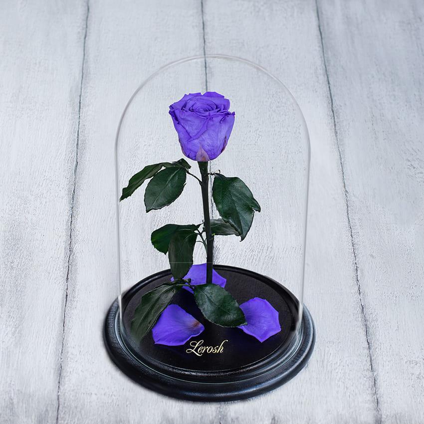 Стабилизированная роза в колбе Lerosh - Standart 33 см,  Лиловый