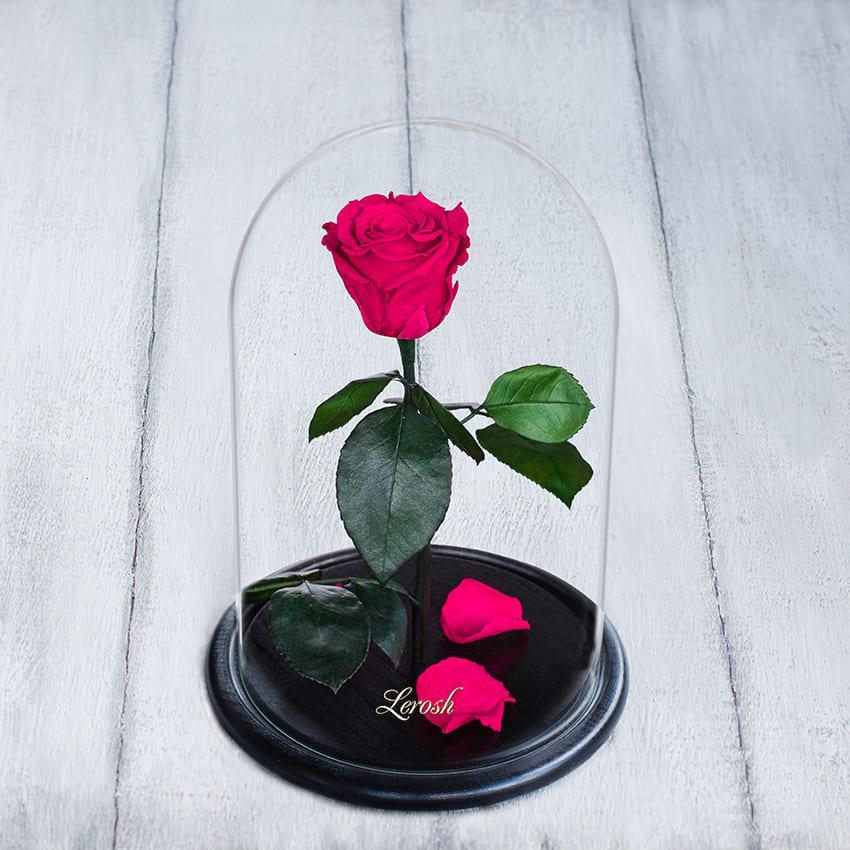 Стабілізована троянда в колбі Lerosh - Standart 33 см, Малиновий