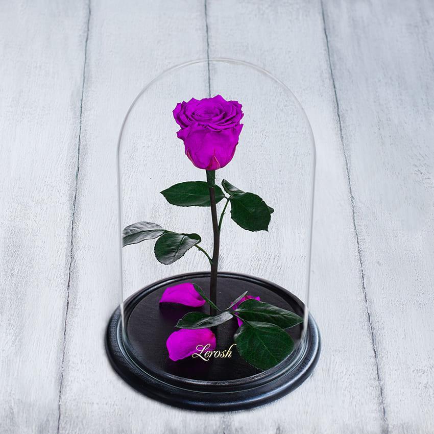 Стабилизированная роза в колбе Lerosh - Standart 33 см,  Фиолетовый