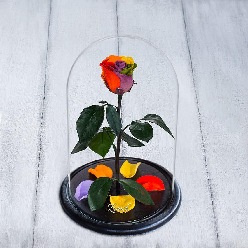Стабілізована троянда в колбі Lerosh - Standart 33 см, Райдужний