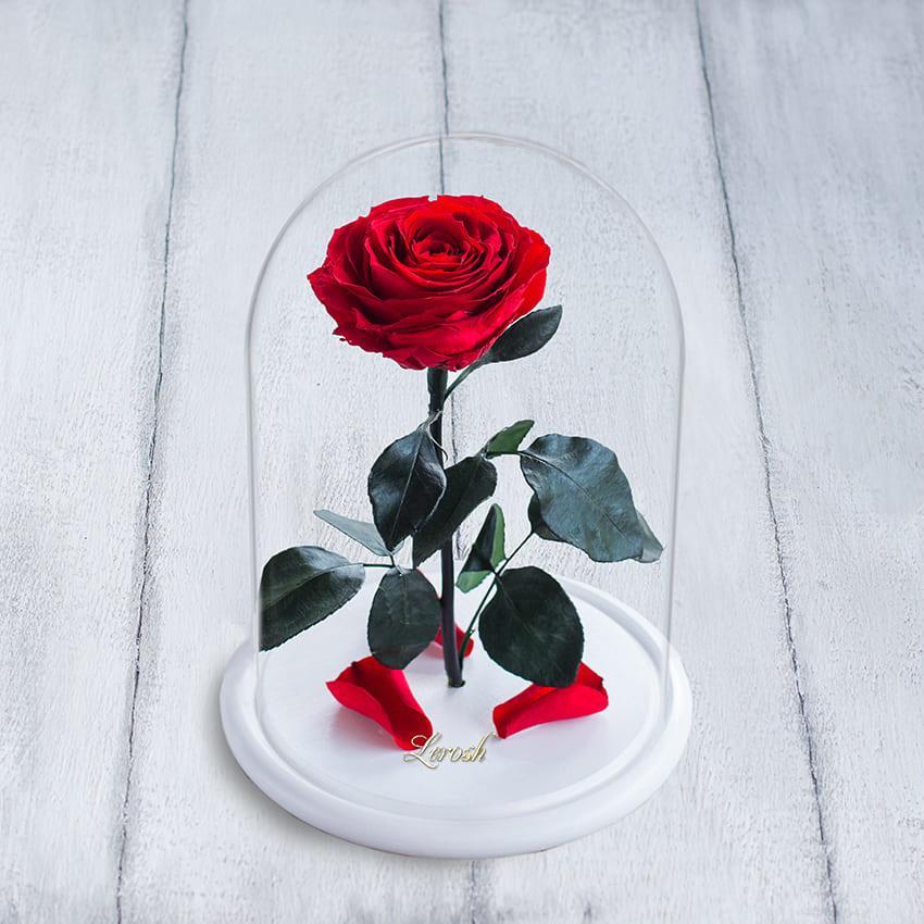 Стабилизированная роза в колбе Lerosh - Premium 33 см,  Красный (Б)