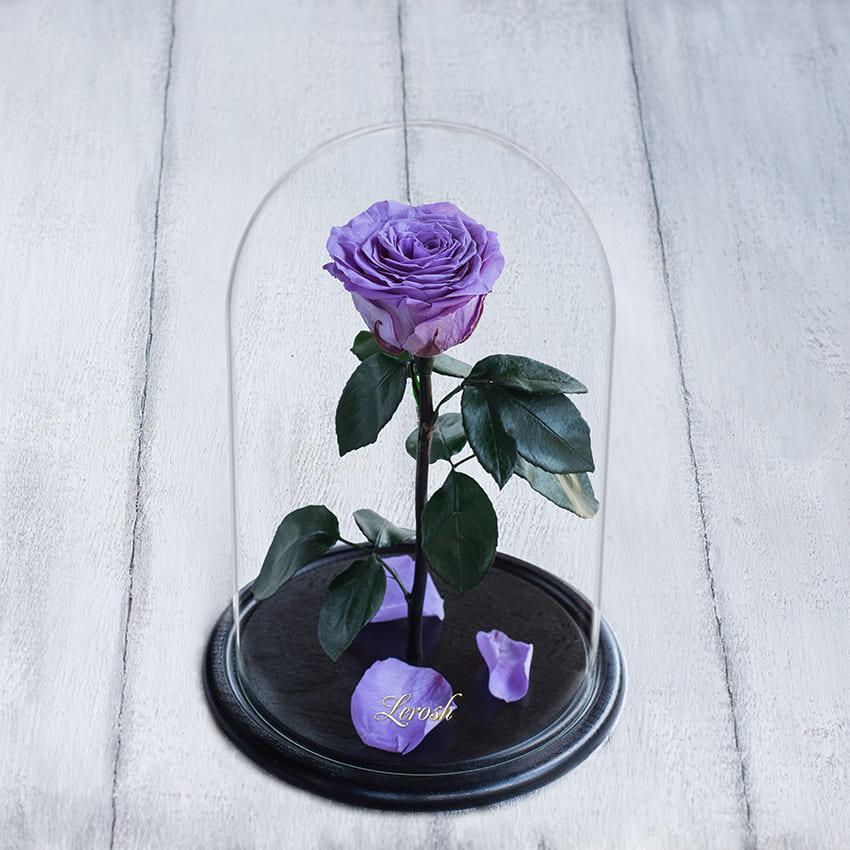 Стабилизированная роза в колбе Lerosh - Premium 33 см,  Лиловый