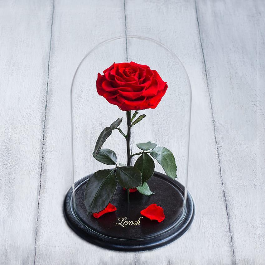 Стабилизированная роза в колбе Lerosh - Premium+ 33 см,  Светло красный