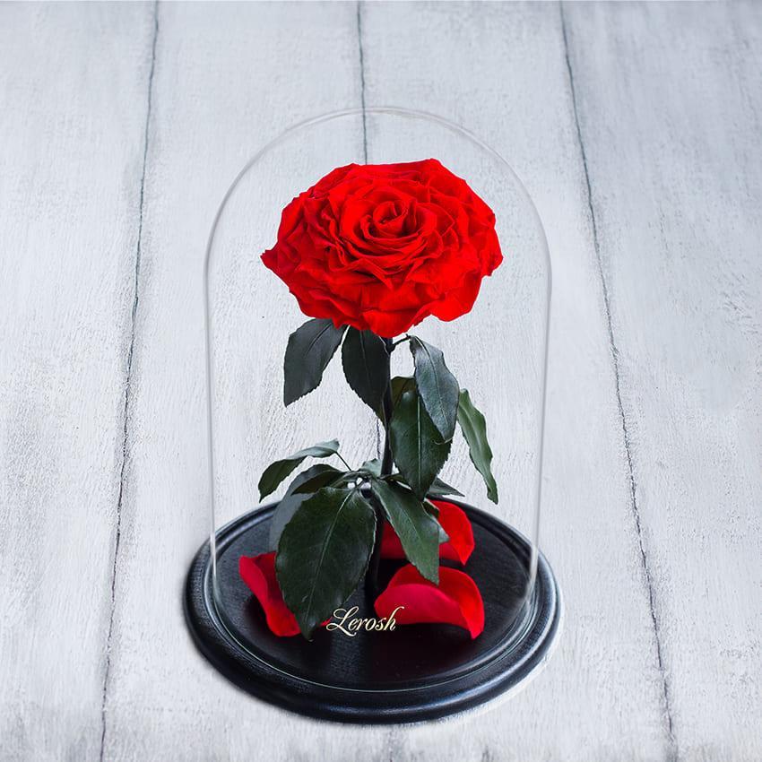 Стабілізована троянда в колбі Lerosh - Lux 33 см, розкритий Червоний
