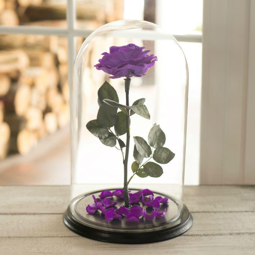 Стабілізована троянда в колбі Lerosh - Lux 33 см, розкритий Фіолетовий