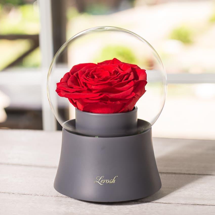 Стабилизированный бутон роза Музыкальный шар Lerosh -  Серый, бутон Premium Красный