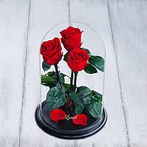 Стабилизированные три розы в колбе Lerosh - Standart 33 см,  Красный