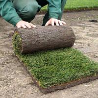 Рулонные газоны, фото 1