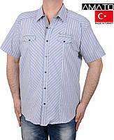 Тенниски мужские Турция.Тенниска в полоску,большого размера.