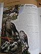 Птицы. Полная энциклопедия Школьник Ю., фото 2