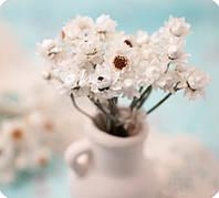 Сухоцветы, гелихризум.