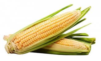 "Семена Кукурузы бондюэль в банках Агромакси ""Бостон F1"" 500 г"
