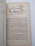 Как разводить кроликов И.С.Минина, фото 4