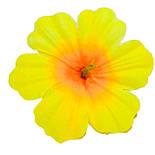 Пресс цветок Мальва 13 см, фото 7