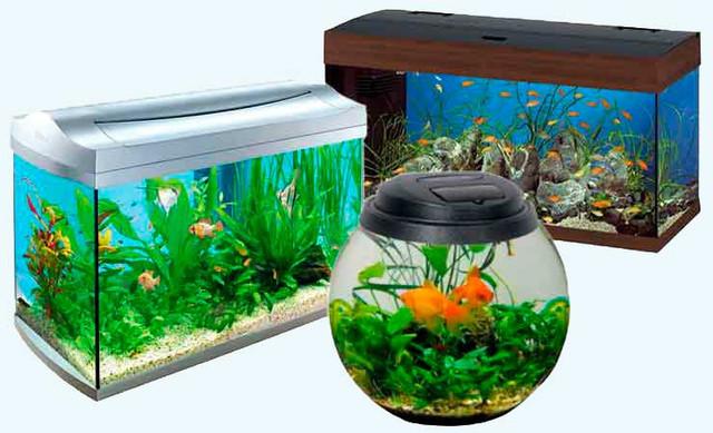 Аквариумы для рыб