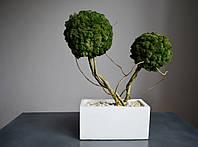 """Подвійне стабілізоване дерево у бетонному кашпо """"Прямокутник"""""""