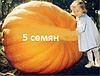 Атлантический гигант Семена тыква гарбуз 1 упаковка 15 семян