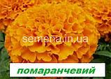 Чорнобривці Тайшан (колір в асортименті) F1 100 шт., фото 2