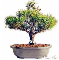 Семена карликовых деревьев Бонсай: 50 шт.! Разновидность 3!