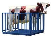 Электронные весы для взвешивания крупного рогатого скота 1.25Х2.0 с колесами для транспортировки