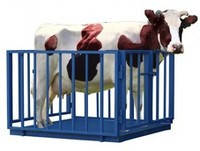 Электронные весы для взвешивания крупного рогатого скота УВК-СК 1.25х2.00
